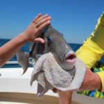 A little sea life made it into our boat during our charter
