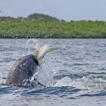Dolphins doing what they do best hunt for fish