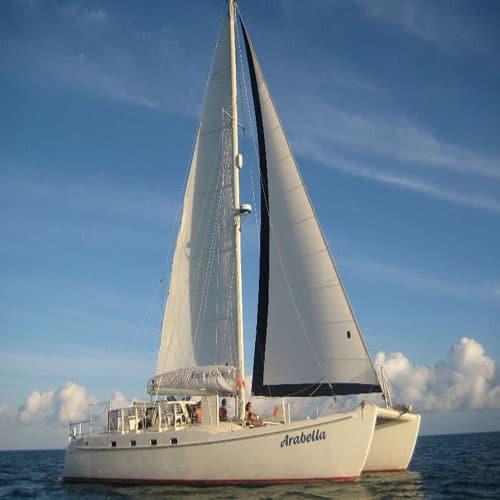 Fun Cat Sailing Featured