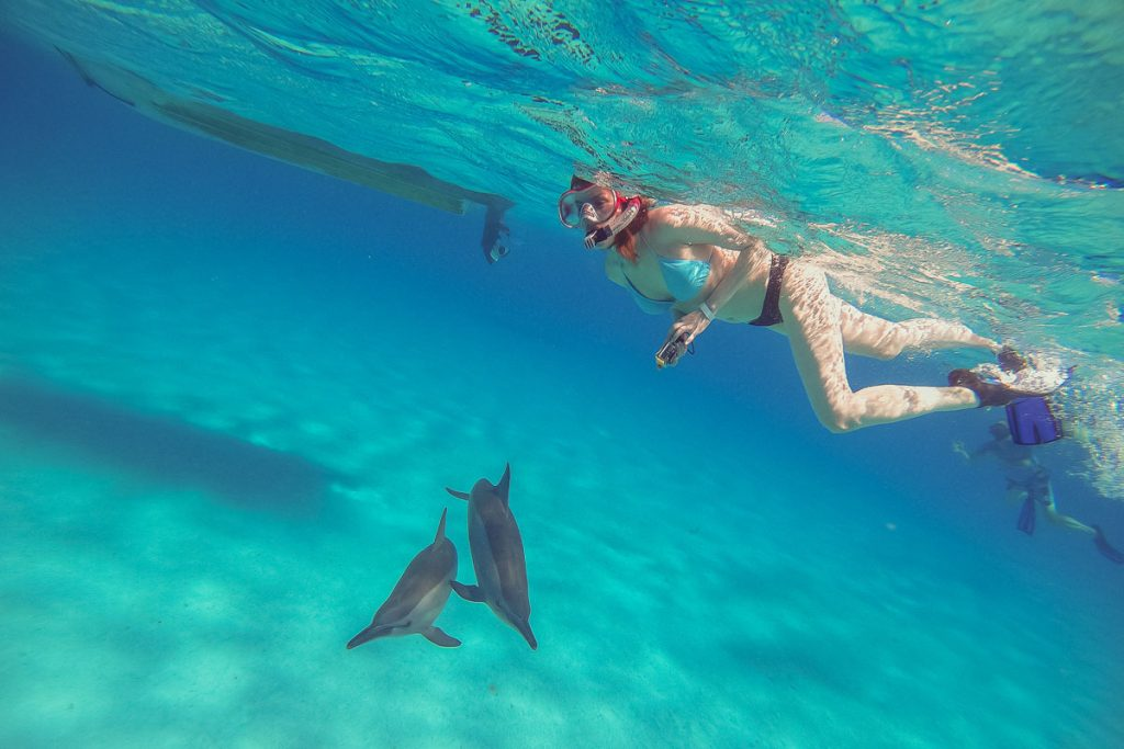 Dolphins. A girl swims with dolphins and shoots them on an action camera.