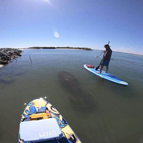 Stand up paddle boarding in Daytona beach with manatees