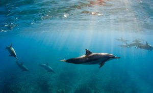 Dolphins are highly intelligent
