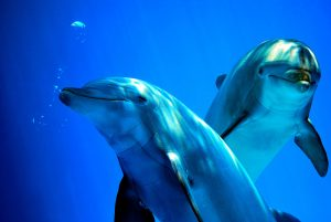 Differences between Dolphins and Porpoises